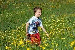 Tour durch die Blumenwiese