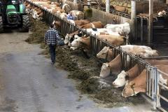 Fütterungszeit im Stall