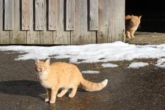 Biohofkatzen